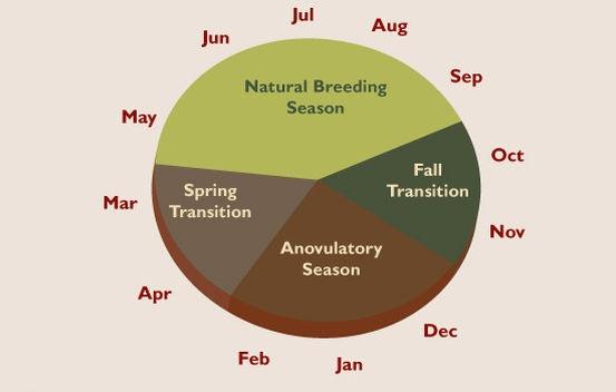 Seasonal breeding pattern of mares in North America