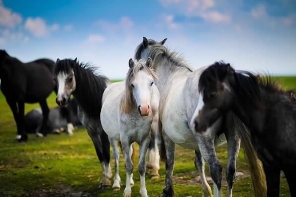 The Horse Industry by the Numbers
